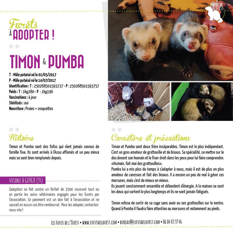 Timon & Pumba à adopter chez les fufus de l'ouest