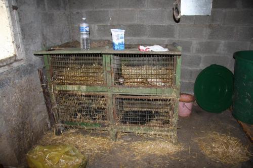 """La """"cage"""" de Lady et Marley, recuellis en 2010"""